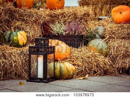 Halloween pumpkins on the street
