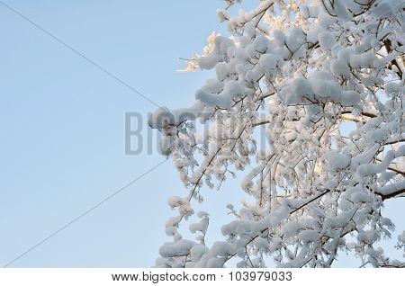 Snow and Ice on Tree Branches