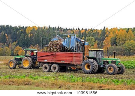 Sugar Beet Harvest In October