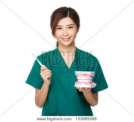 Dentist hold with denture and toothbrush for demonstration