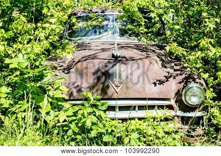 Cadillac In The Weeds