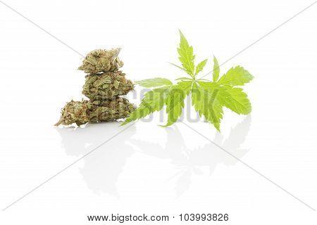 Cannabis Foliage Isolated On White Background. Alternative Medicine.