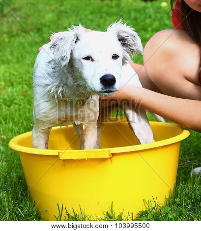 Ids Wash White Puppy In The Basin