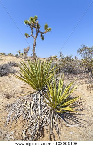 Desert Plants In Joshua Tree National Park, California, Usa.