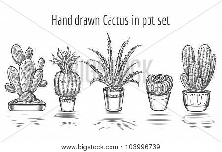 Beauty cacti. Hand drawn cactus in pot set