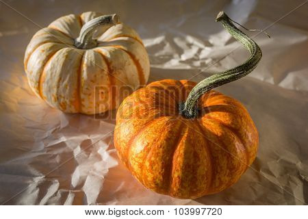 Decorative mini pumpkins or gourds on a crinkled paper background.