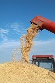 image of auger  - Grain auger of combine pouring soy bean into tractor trailer - JPG