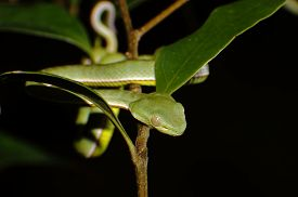 foto of green snake  - Vogel - JPG