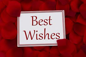 picture of pedal  - Best Wishes Card A white card with text Best Wishes and a red rose pedal backgrounds - JPG