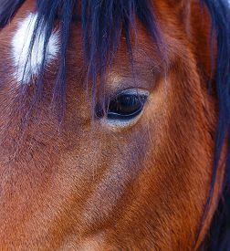 foto of lachrymal  - Close Up of a brown horse eye - JPG