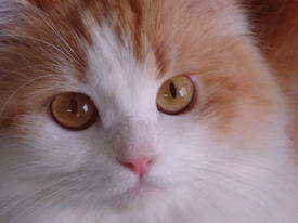 foto of cute animal face  - great impression on my cat - JPG