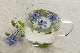 foto of borage  - Glass cup with borage tea and flowers - JPG