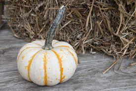 foto of haystacks  - a small white and orange pumpkin on a wooden table with a haystack in the background - JPG