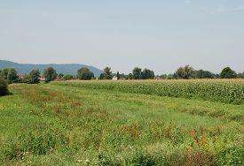 image of marshes  - The Ljubljansko Barje also known as the Ljubljana Marshes - JPG
