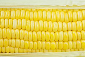 stock photo of corn cob close-up  - Close up of fresh corn cobs on background - JPG