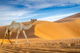 stock photo of oasis  - Taken in the Liwa Oasis Abu Dhabi area United Arab Emirates - JPG