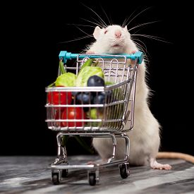 picture of rats  - Cute pet rat with a shopping cart on dark background - JPG