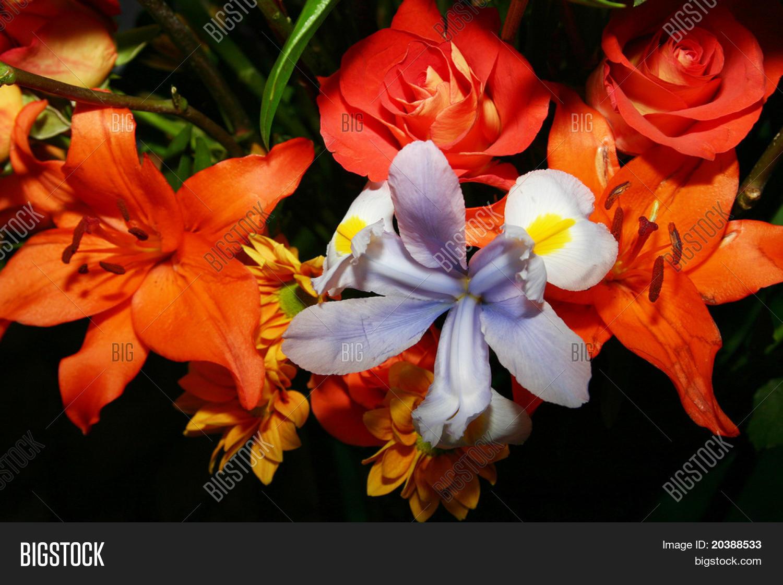 70178b4d1 http   www.bigstock.com.br image-20388233 stock-photo-retrato-de ...