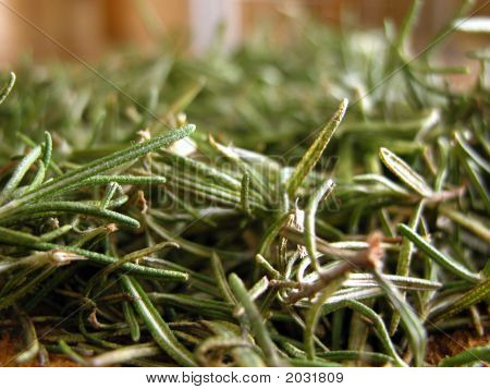 Spices And Herbs: Close-Up Of Rosemary Leaves