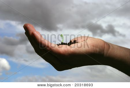hand with bud