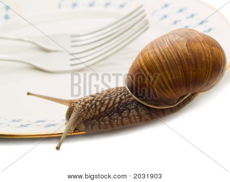 Snail And Plate Closer