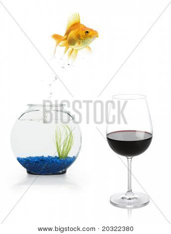 A goldfish leaping from a fishbowl into a glass of red wine.