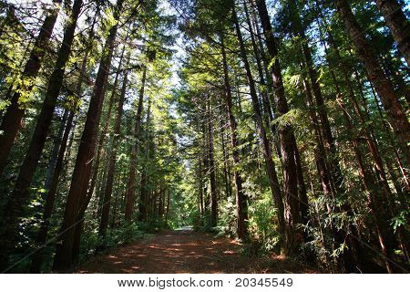Trail in sequoia giant forest