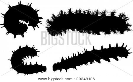 illustration with caterpillar silhouettes collection isolated on white background