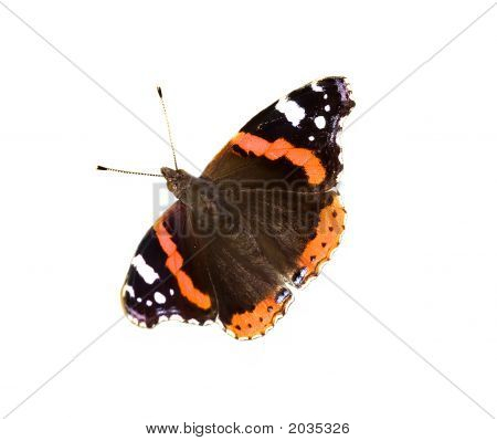 Isolated Black Butterfly