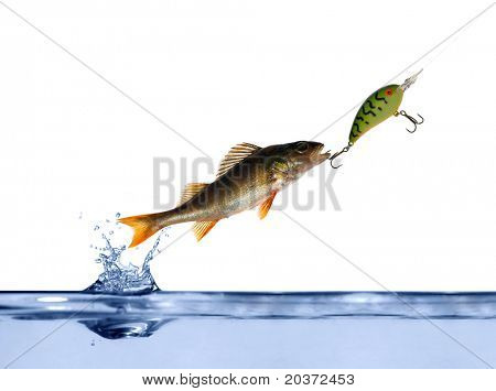 small perch on hook above blue water