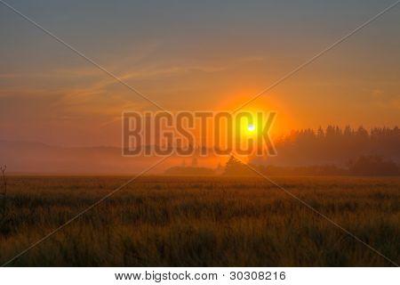 Red Sundown Over Wheat Field
