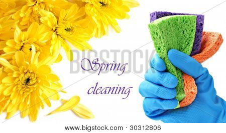 Spring cleaning concept.  Gloved hand with colorful sponges on white background with yellow mums and copy space.