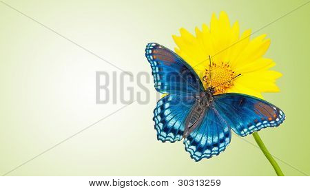 Business card design with blue butterfly on a yellow flower with green background - concept for green values