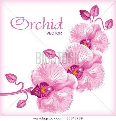 Excellent background with realistic vector illustration of orchid