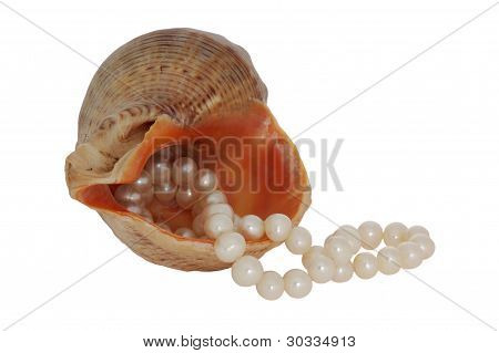 Pearl Inside The Shell