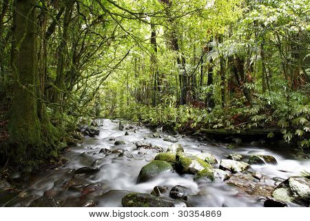 Stream in tropical forest