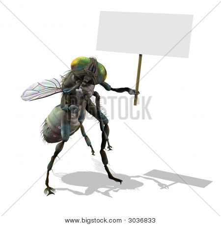 Giant Fly With Blank Sign