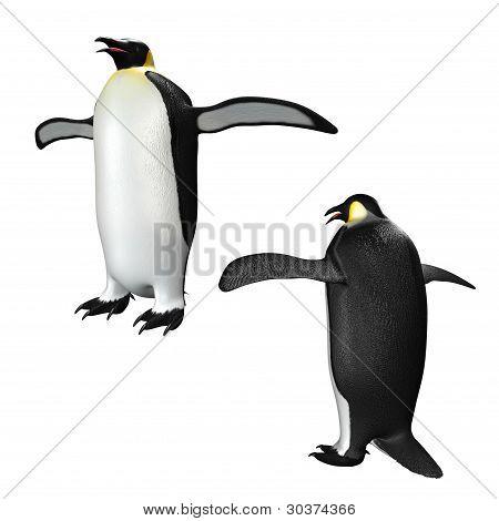 Emperor Penguin Illustration