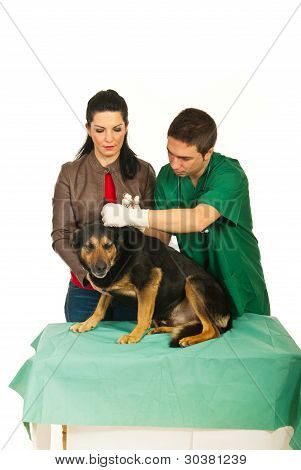 Vet Male Cleaning Dog Ears