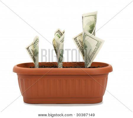 Money Growth Process
