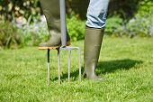 image of aeration  - Woman aerating the garden lawn with a digging fork - JPG
