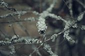 Gray Tree Branches Covered With Moss In The Forest. Close Up. Beautiful Moss On The Branches. The Tr poster