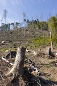 image of deforestation  - Deforested area in a forest with cut tree in the foreground - JPG