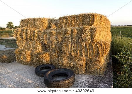 Dried Straw In Haystack