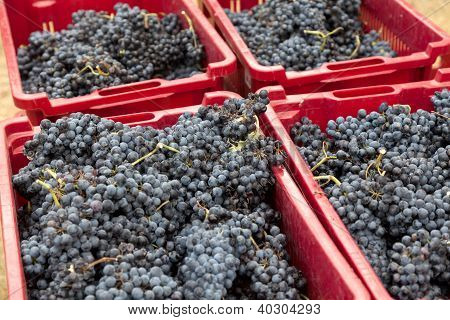 Grapes In Red Boxes