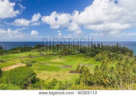 Keanae In Maui With Taro Fields