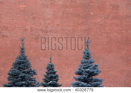 Pines on red wall