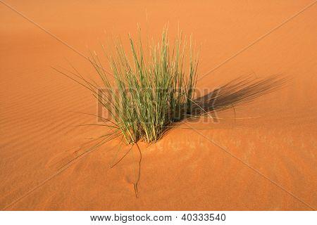 Vegetação de Duna