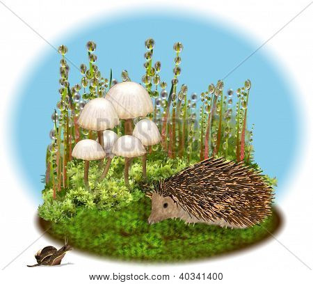 Hedgehog and snail meet among the mosses.
