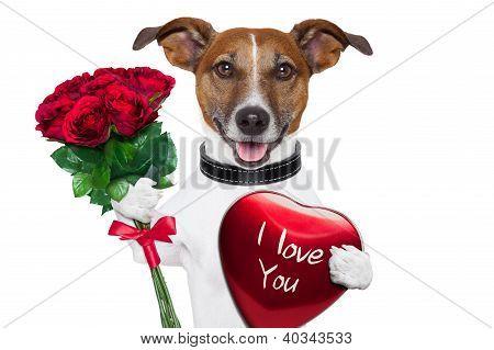 Valentine-Hund